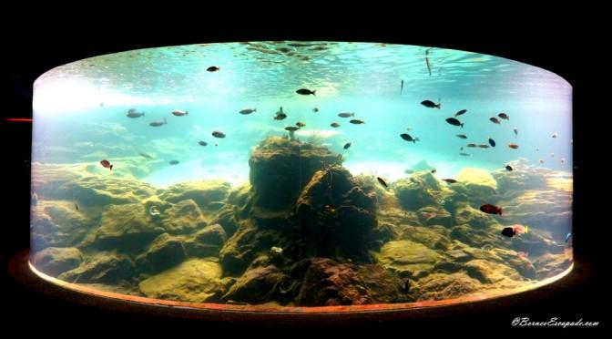 Aquarium & Marine Museum: Kota Kinabalu
